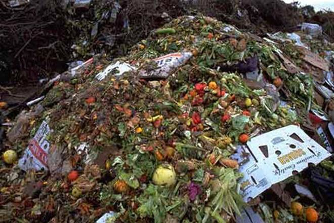food, food waste, food wastage, save food